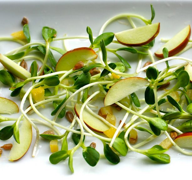 content_salad-with-sprouts20