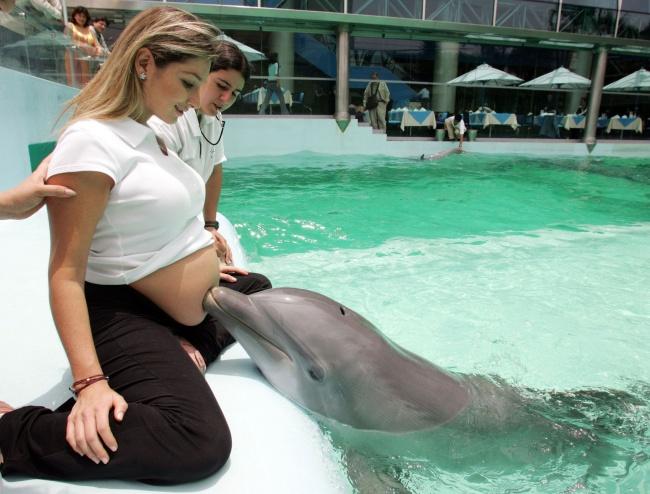 16416560-R3L8T8D-650-dolphin