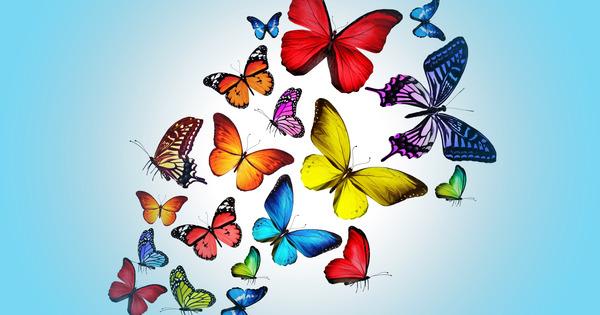 обрез бабочки на 22dK