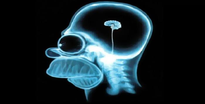 Homer-simpson-brain1280x80018857