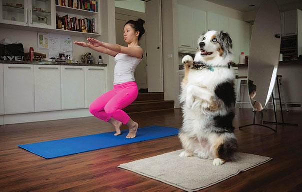 animals-yoga-poses-113-57bf00ff43aa5__605