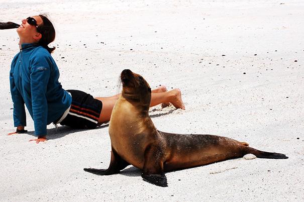 animals-yoga-poses-83-57bd5f1917c57__605