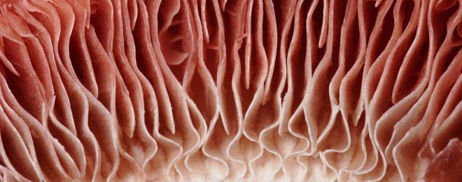 mushroom-macro-detail