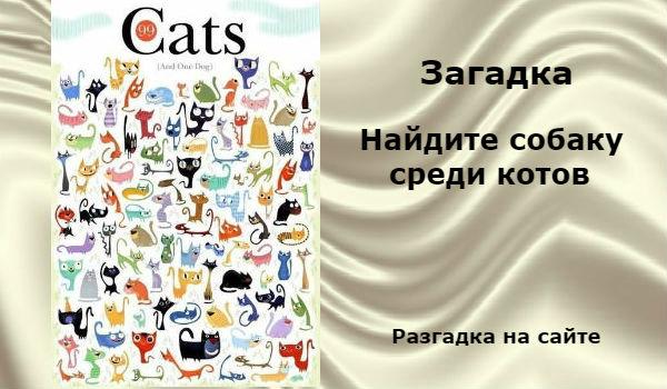 zagadka-koty