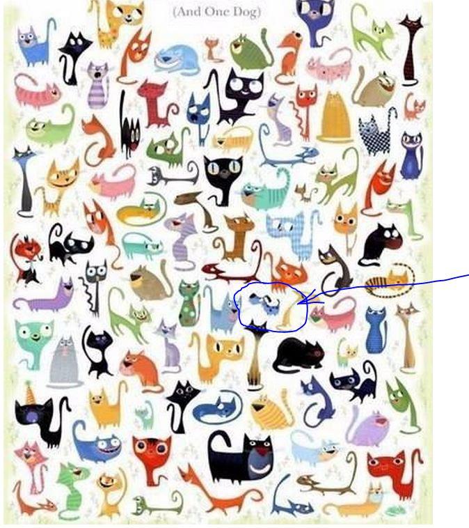 zagadka-koty-i-sobaka