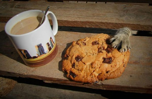 141020013858_9929310-r3l8t8d-650-cat-thief-funny-animal-pictures-45__880