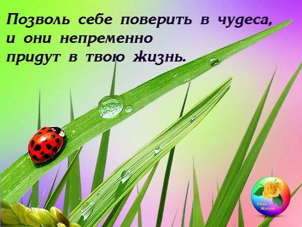 15056250_974537879343707_3233626337072592031_n-1