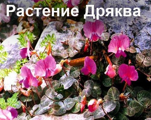 96087197_5102761_artrolait