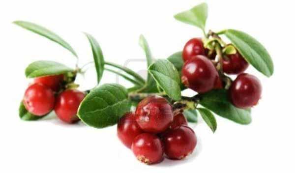cowberry1