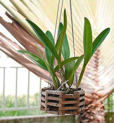 Важные особенности ухода за орхидеей фаленопсис