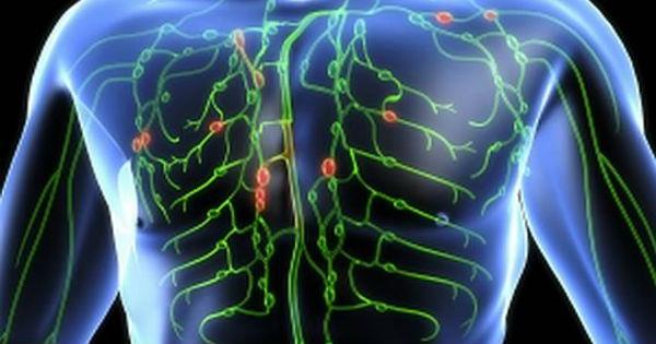 lymph system1