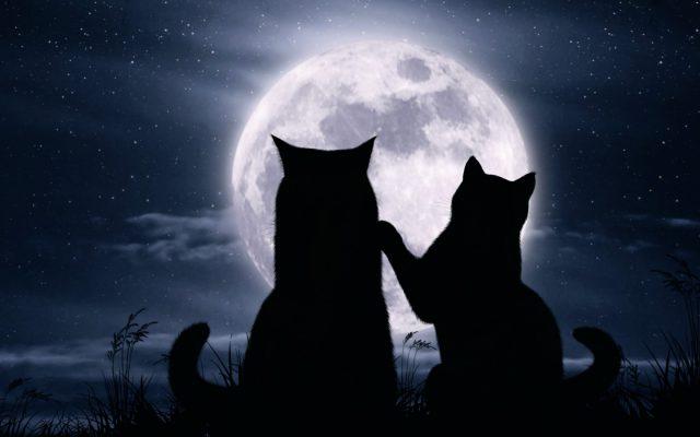 koshki-luna-noch-zviozdy-romantika