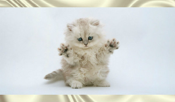 """Котенок, который говорит """"гав"""". Вы должны это увидеть!"""