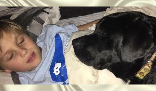 Собака спасла своего маленького хозяина