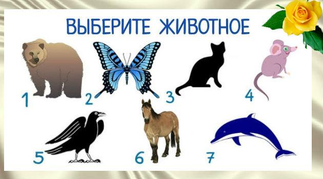 Каким животным вы хотели бы быть? Прочитайте, что это означает
