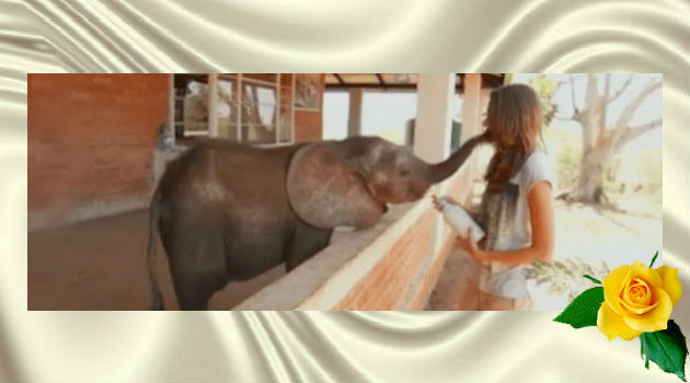 Люди спасли слоненка, которого бросило стадо