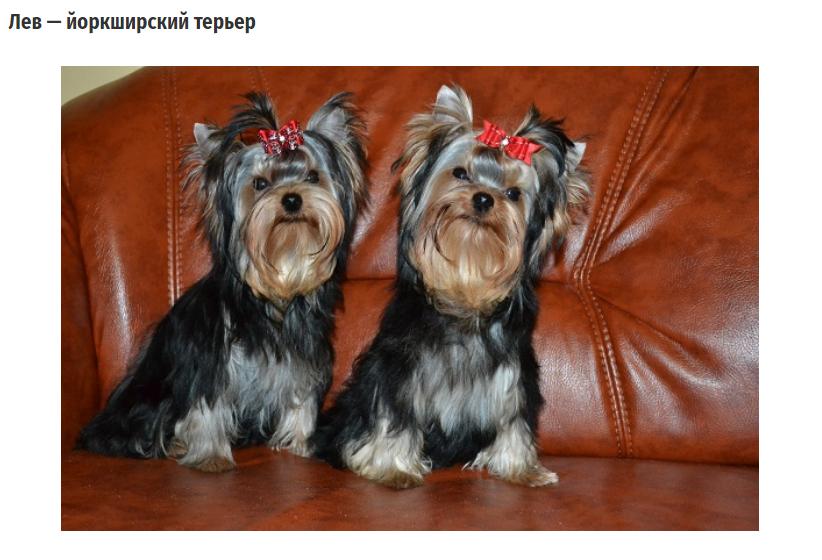 На какую собаку вы больше всего похожи? Об этом расскажет ваш знак Зодиака