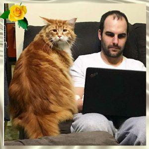Покупая кота, никто не мог подумать, что он станет самым длинным котом в мире