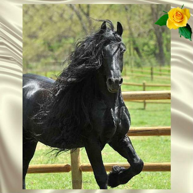 В красоту этого коня невозможно не влюбиться