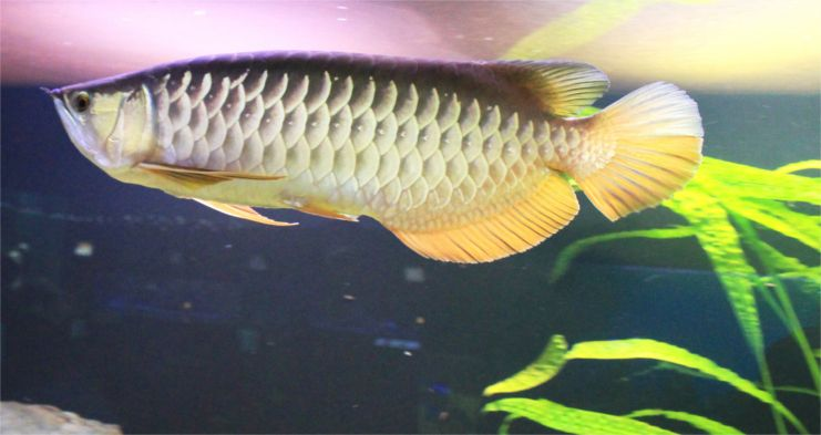 Самые необычные и дорогие аквариумные рыбы