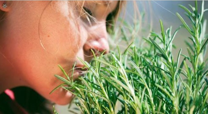 Самая мощная трава для мозгового кровообращения