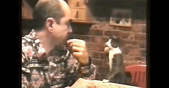 Кот общается с хозяином на языке жестов.