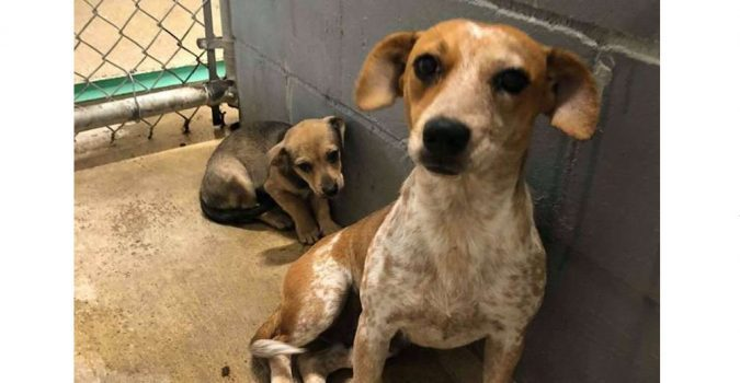 Mom Dog Tries To Hide Her Baby In Crowded Sheltera *** Дрожа от стрaхa в приютe, мама-собака закрывала собой щенка…