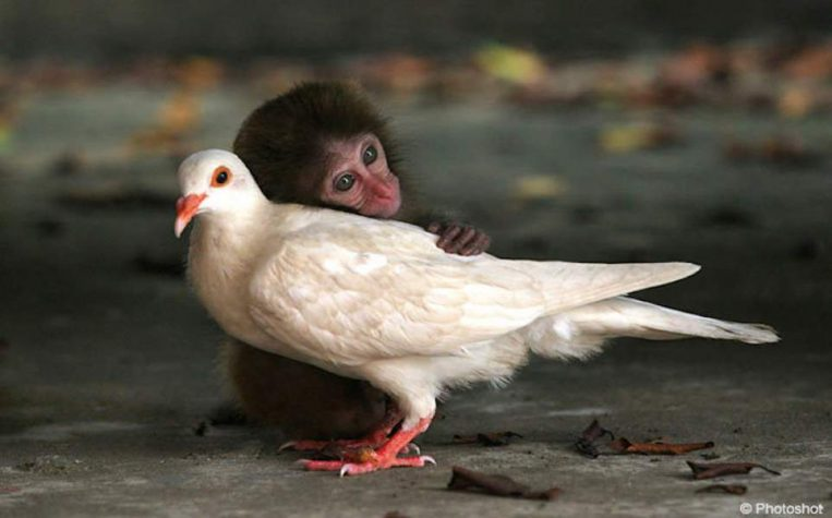 10 Unlikely Animal Friendships - Check out these 10 unlikely but adorable animal friendships that will melt your heart.