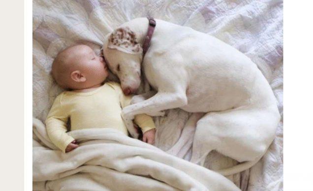 Собака боялась всех людей, кроме этого малыша. Трогательная дружба