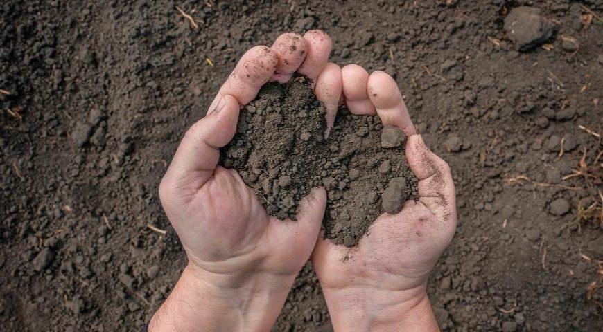 Почему люди едят землю и какая она на вкус? Объясняет землеед со стажем